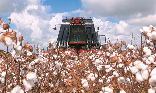 Cotton-Pickers-features-04.jpg